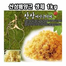 한국농업 산삼배양근 생체 1kg-명절 설날 추석 부모님 효도 건강 선물